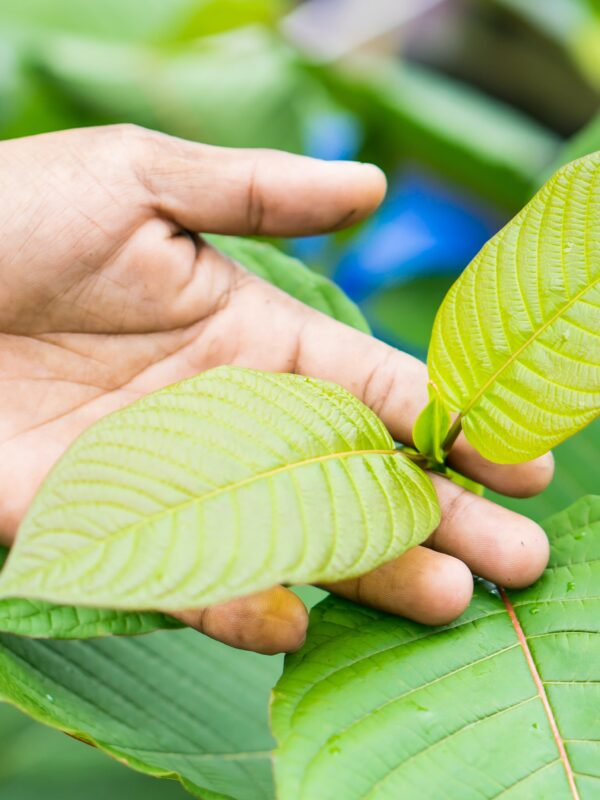 How To Make Your Kratom For Stress And Anxiety Resemble A Million Bucks